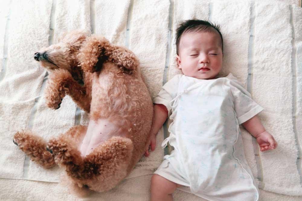 犬と赤ちゃん